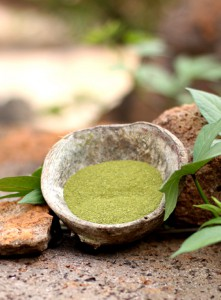 The Moringa powder is rich on protein and amino acids